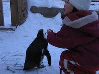 ノースサファリサッポロ ケープペンギン/CAPE Penguin